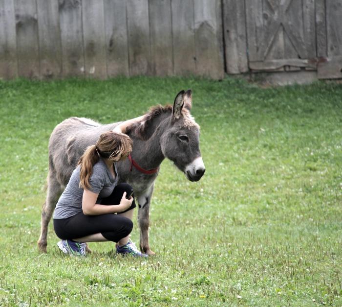 donkey me
